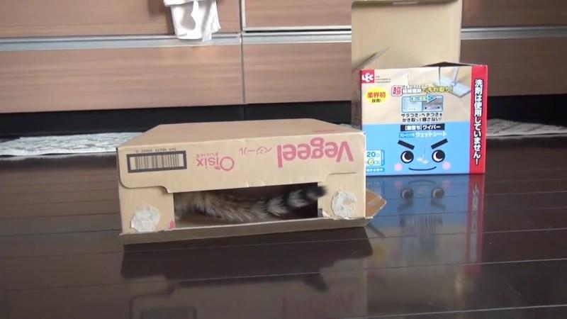 03-思わず笑顔に!段ボール箱で遊んでいた仔猫に起きたかわいいハプニング!