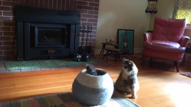 10-壺型のキャットハウスから飛び出す仔猫! 勢いよく飛び出すも・・・