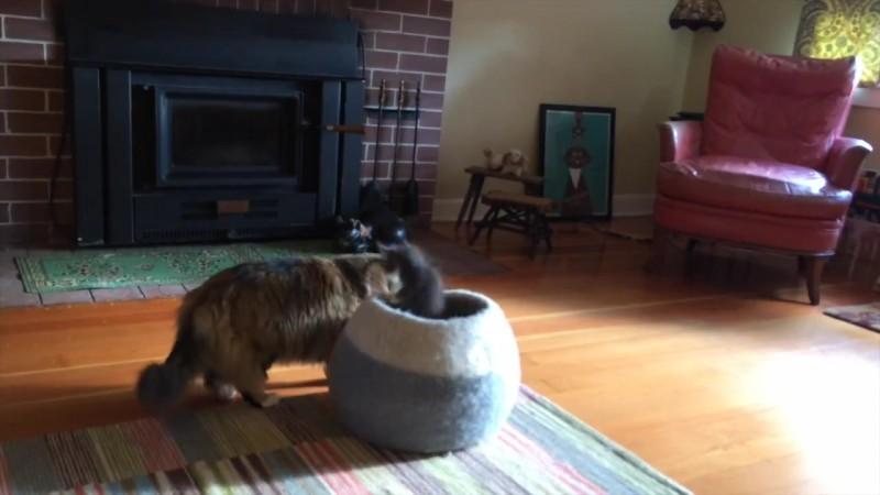 05-壺型のキャットハウスから飛び出す仔猫! 勢いよく飛び出すも・・・