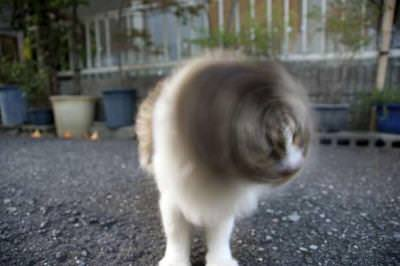 06-猫の新必殺技「猫ドリル」って何?