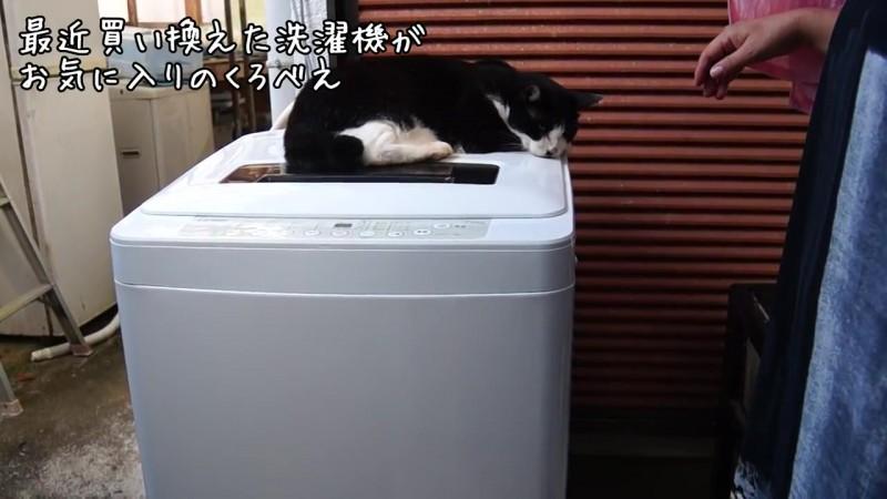 02-洗濯機の上から意地でもどかない!洗濯機の上が大好きな猫