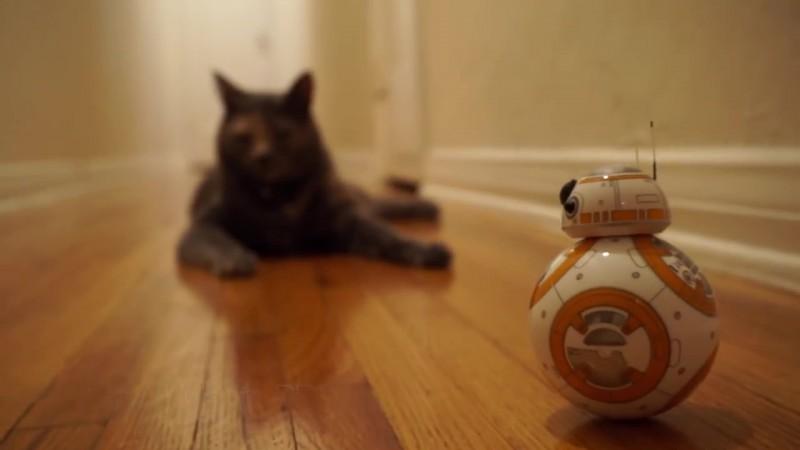 01-スターウォーズファン必見!? 新シリーズに登場するBB8のオモチャと遊ぶ黒猫