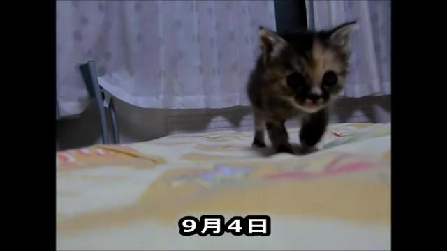 05-よちよち歩きの仔猫の成長記録。だんだん歩くのが上手になってる(#゚ロ゚#)