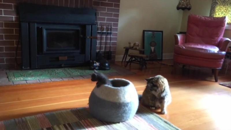 07-壺型のキャットハウスから飛び出す仔猫! 勢いよく飛び出すも・・・