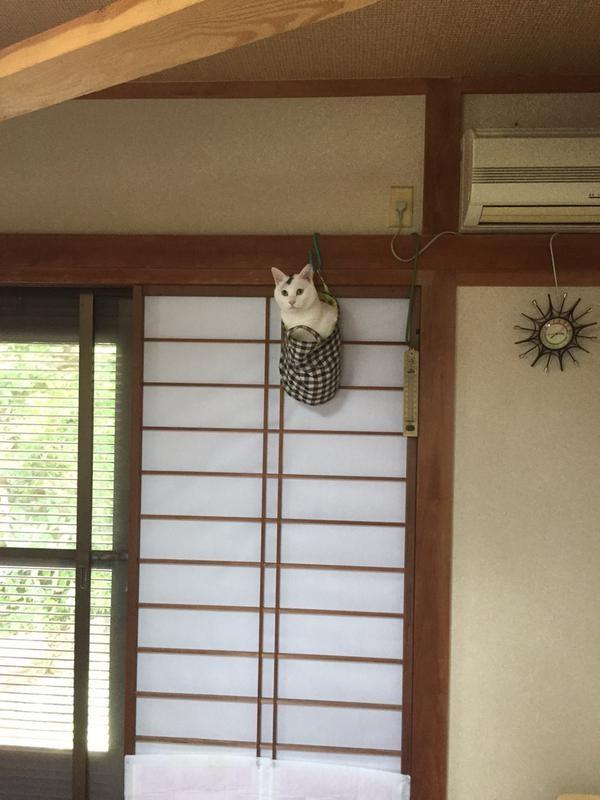 01-ミノムシみたいな猫が発見されTwitterで話題に!