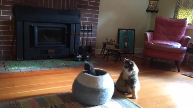 09-壺型のキャットハウスから飛び出す仔猫! 勢いよく飛び出すも・・・