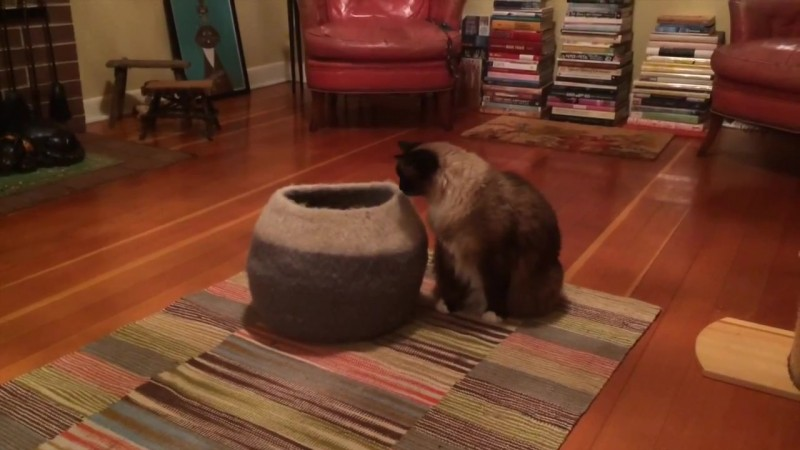 01-壺型のキャットハウスから飛び出す仔猫! 勢いよく飛び出すも・・・