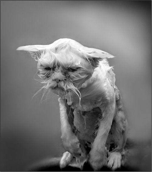 07-お風呂が嫌いな猫の不機嫌な写真15枚