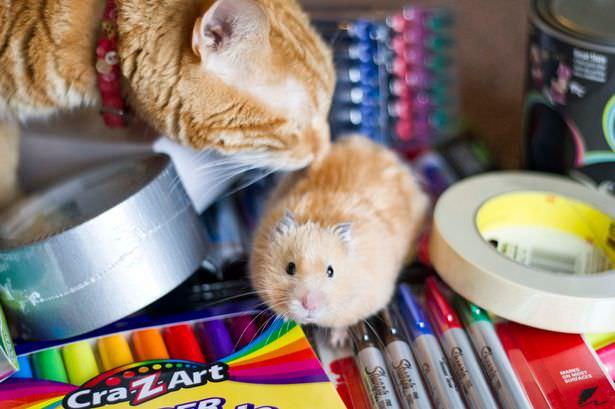 04-トムとジェリー? 猫とハムスターの仲良し画像にホッコリ(。・∀・。)