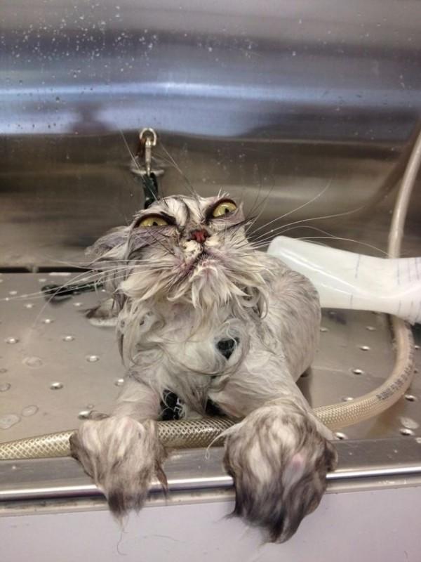 09-お風呂が嫌いな猫の不機嫌な写真15枚