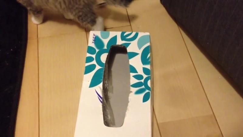 ティッシュ箱の中に入りたい〜。なかなか入れない仔猫、その理由とは?09