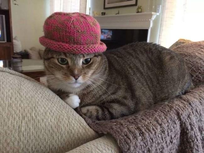 024-帽子をかぶったお洒落な猫たち。どの子が1番かわいい?