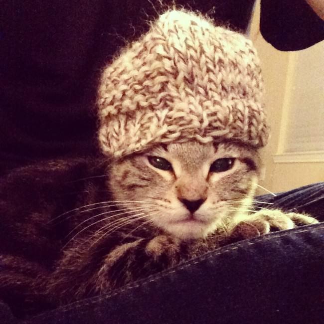 009-帽子をかぶったお洒落な猫たち。どの子が1番かわいい?