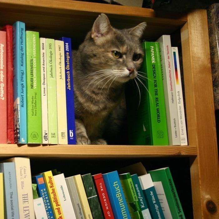 06-本好きのみなさんへ。読書が好きな猫たちはいかが?