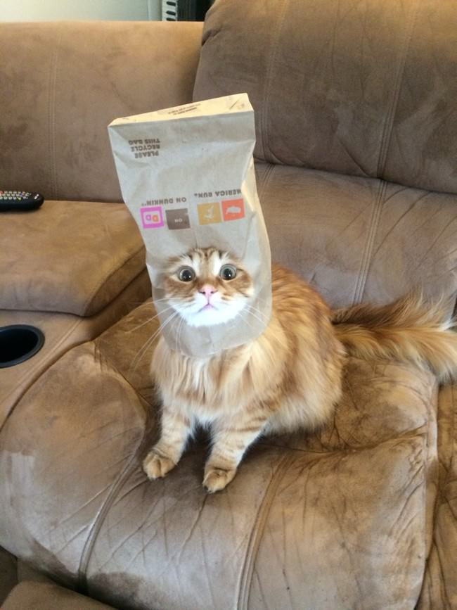 012-帽子をかぶったお洒落な猫たち。どの子が1番かわいい?