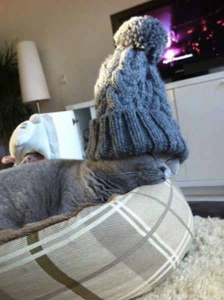 019-帽子をかぶったお洒落な猫たち。どの子が1番かわいい?