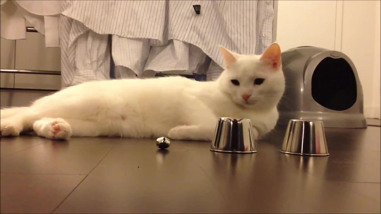 01-みなさんのお家の猫ちゃんはできる?-猫の集中力が凄い!