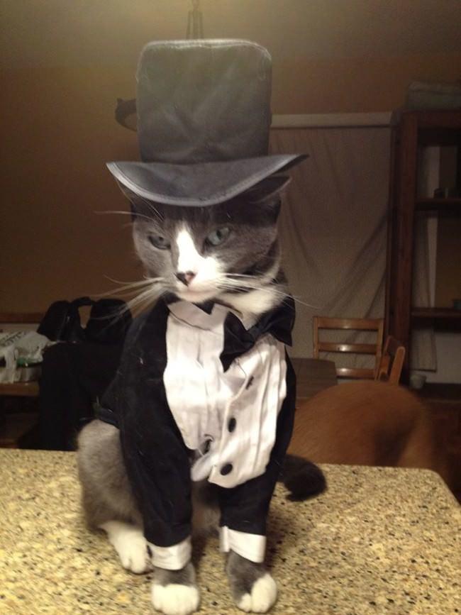 016-帽子をかぶったお洒落な猫たち。どの子が1番かわいい?