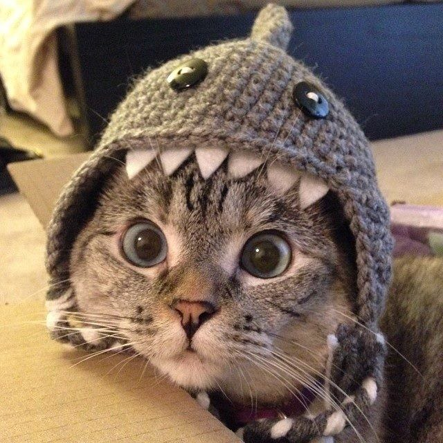 007-帽子をかぶったお洒落な猫たち。どの子が1番かわいい?