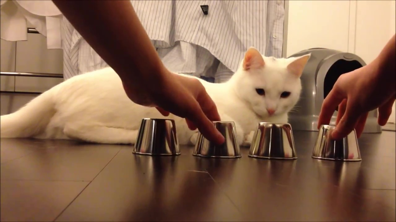 04-みなさんのお家の猫ちゃんはできる?-猫の集中力が凄い!