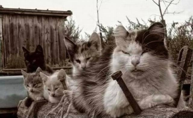 cats_that_are_scarily_evil_looking_640_13