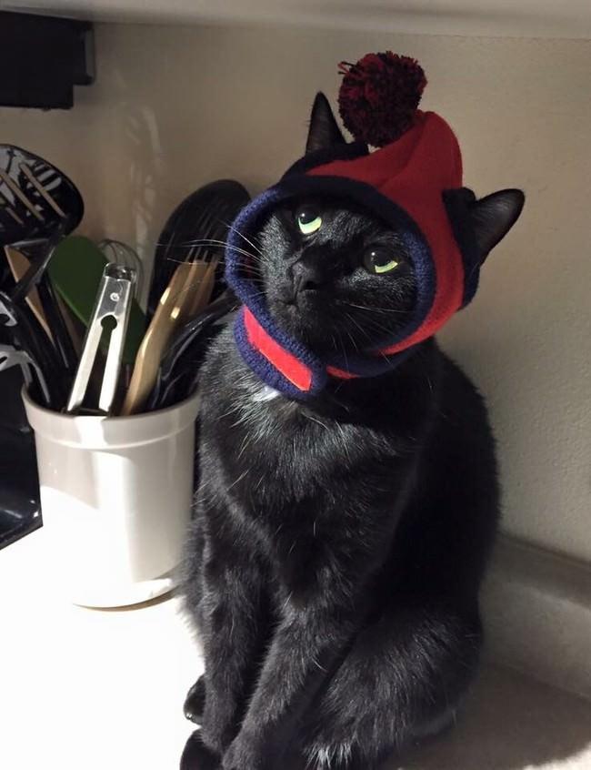 013-帽子をかぶったお洒落な猫たち。どの子が1番かわいい?