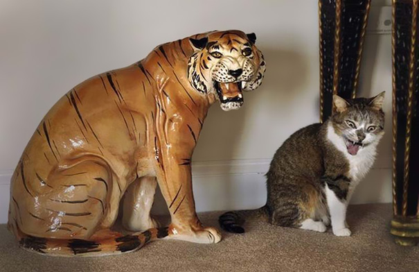 funny-perfectly-timed-cat-photo-29__605