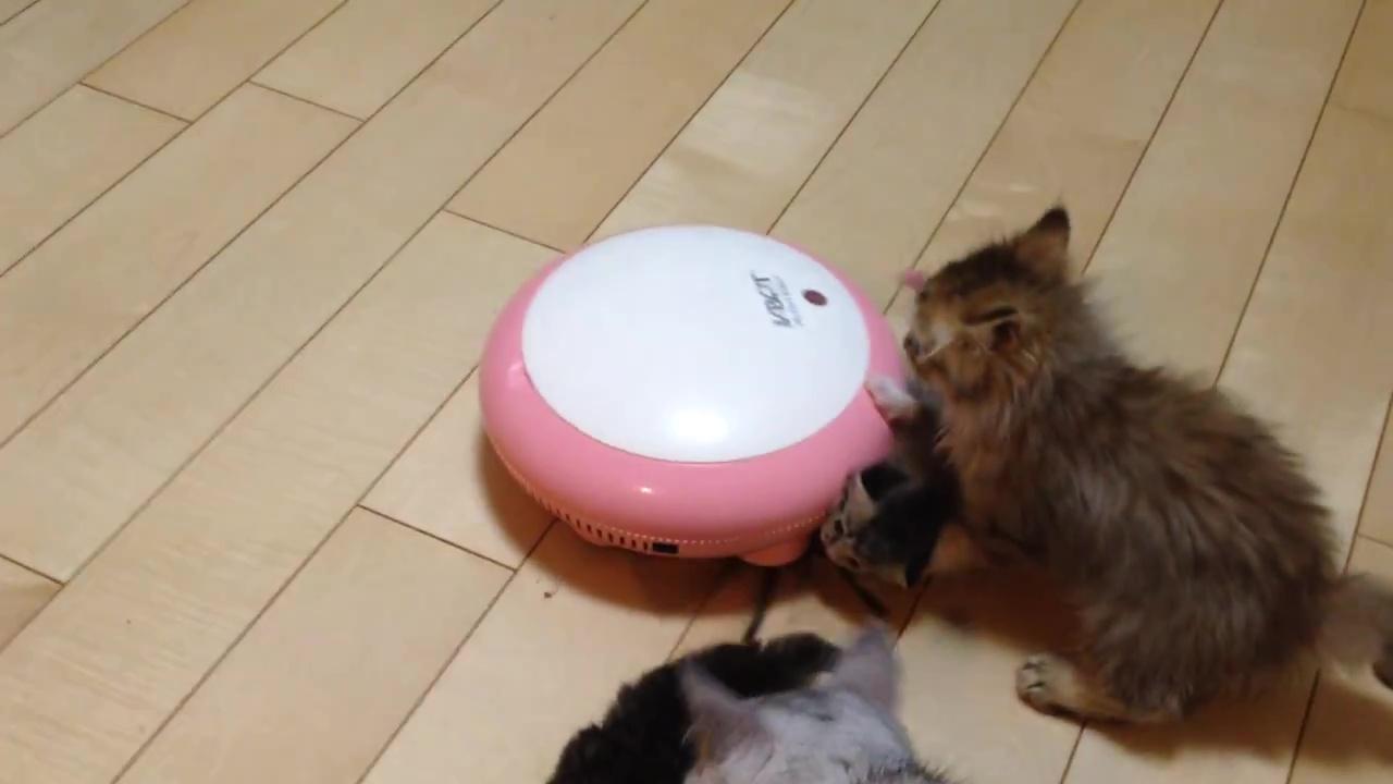 04-掃除機ロボットの上で遊ぶ子猫。滑って落ちても安心!だって優しく見守る家族がたくさんいるもの
