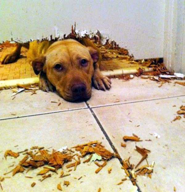 dogs-acting-like-jerks-15