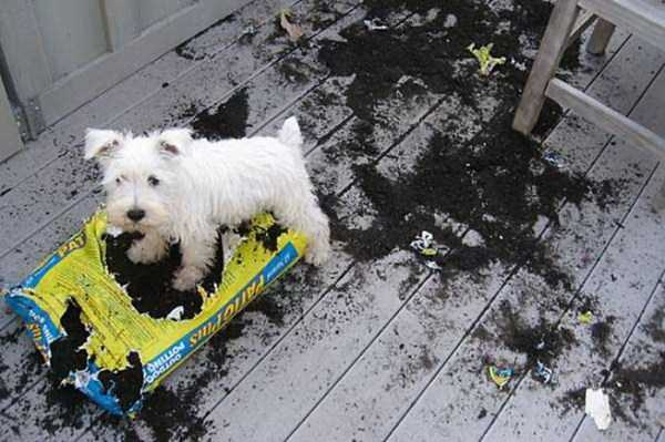 dogs-acting-like-jerks-17