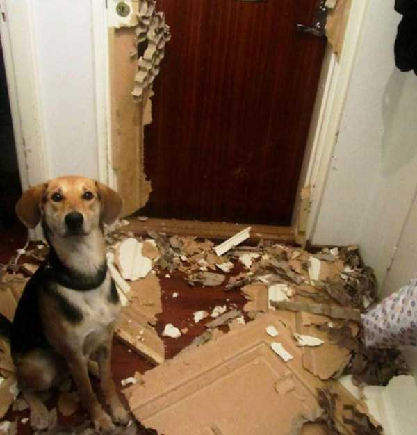 dogs-acting-like-jerks-20