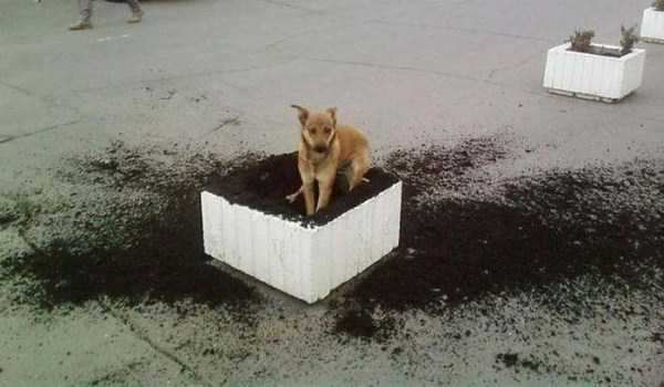 dogs-acting-like-jerks-22