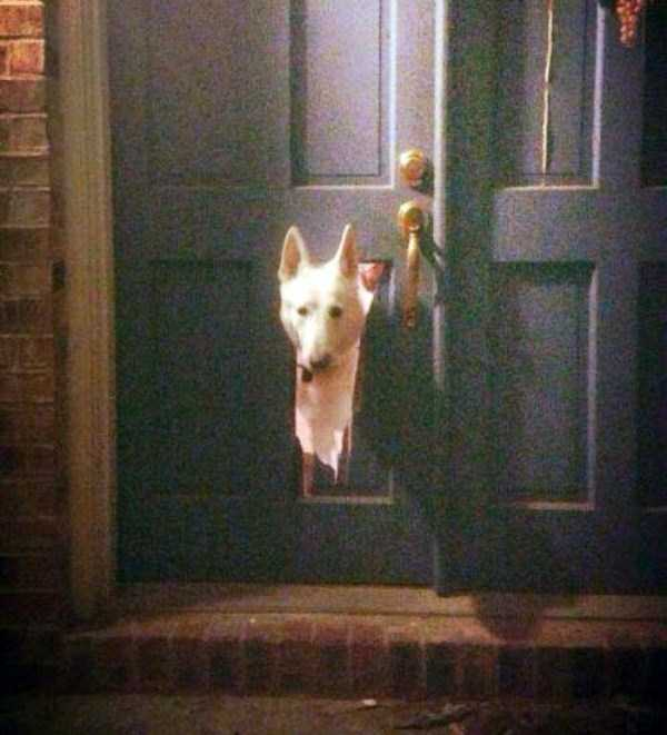 dogs-acting-like-jerks-6