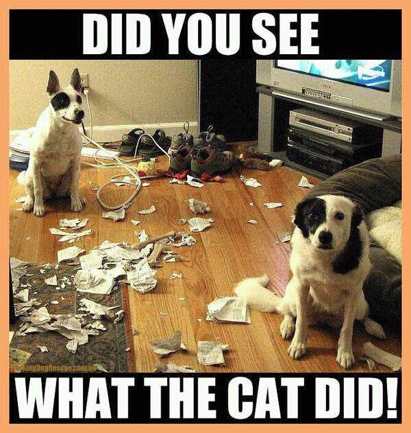 dogs-acting-like-jerks-8