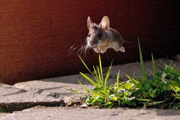 perfectly-timed-photographs-18