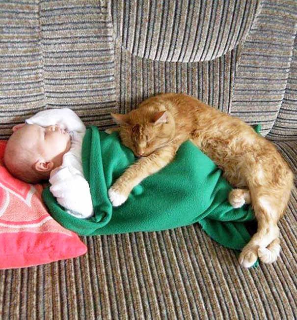 06-ほっこり20枚! 赤ちゃんとネコの仲良しな風景