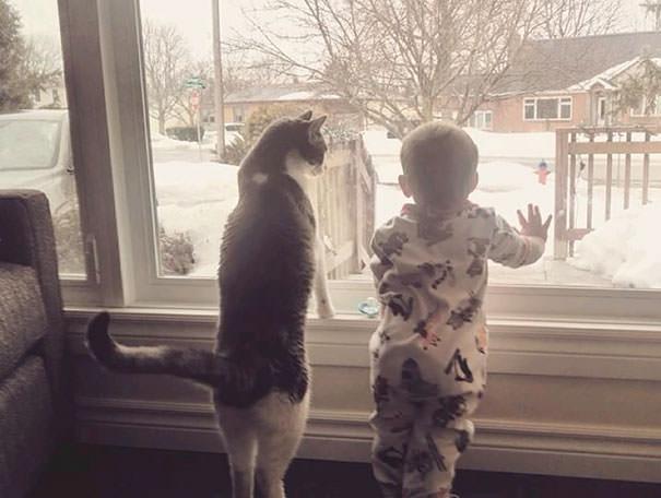 03-ほっこり20枚! 赤ちゃんとネコの仲良しな風景