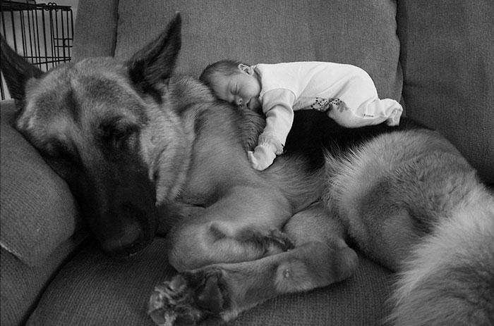 every-kids-need-pets-7__700