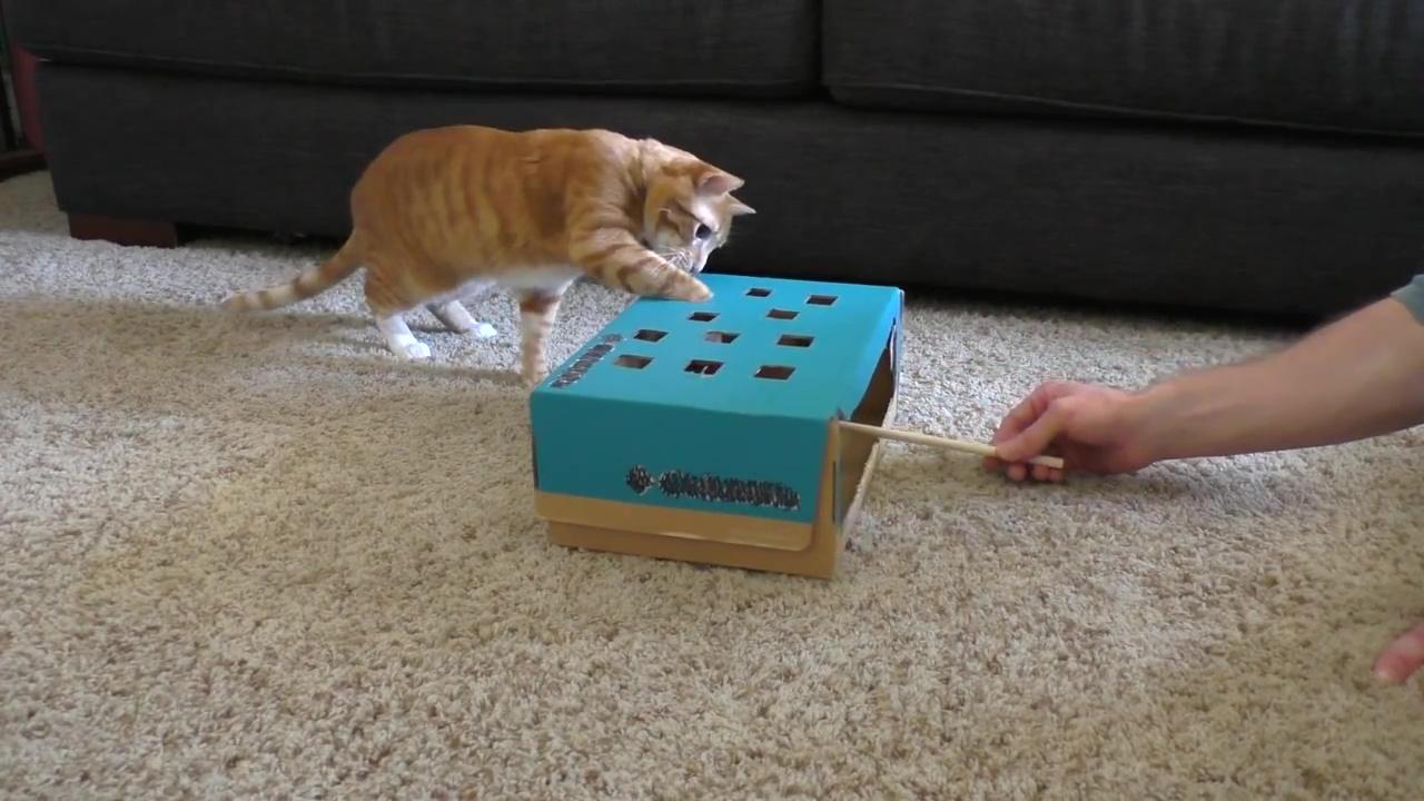 07-ビックリ! ネコの抜け毛はあれを使えば簡単だったなんて・・・ネコの飼い主さんたちへ5つのネコテクニックをご紹介!