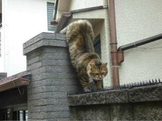 01-とげの山を越えてネコが向かったのは?-とってもほんわかな物語がありました!
