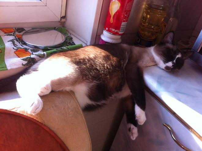 comfy-kitchen