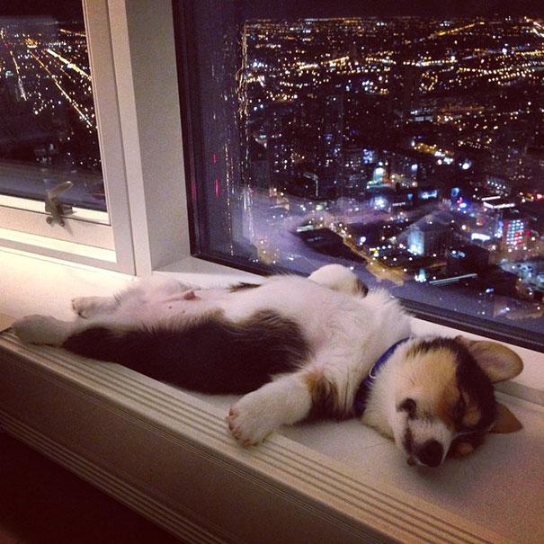 cute-sleeping-animals-622__605