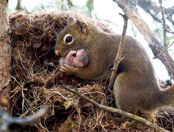 cute-squirrel-photography-171__700