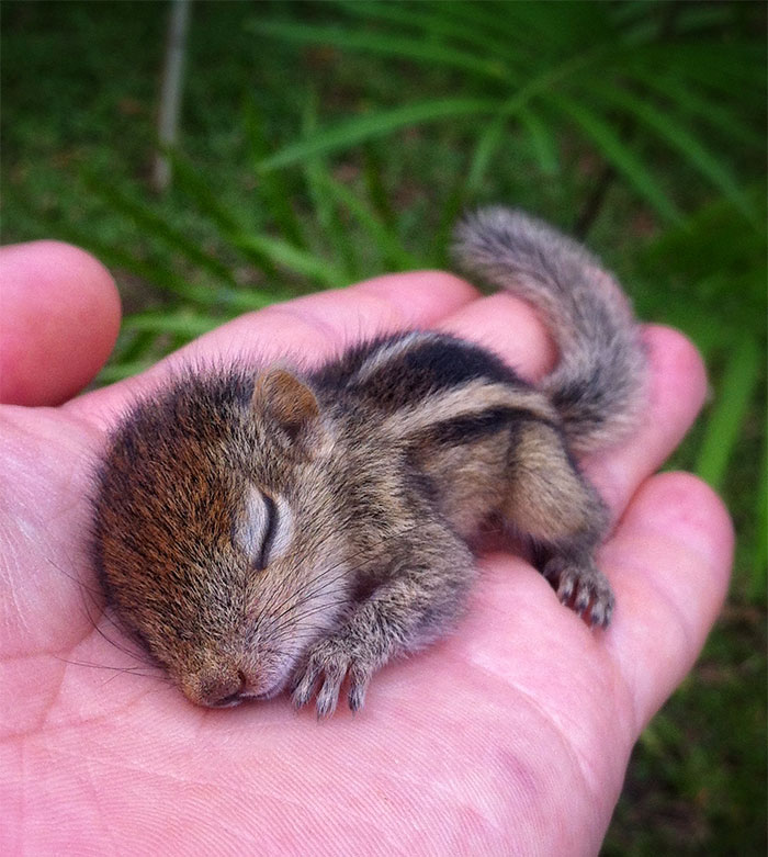 cute-squirrel-photography-17__700