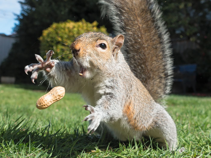 cute-squirrel-photography-361__700