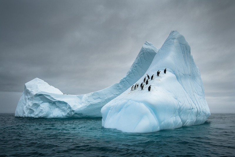 penguin-awareness-day-photography-61