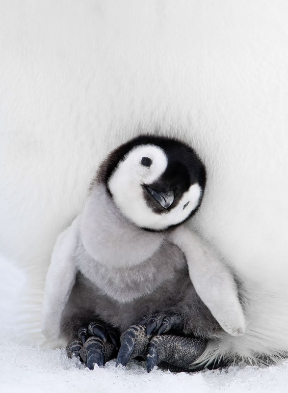 penguin-awareness-day-photography-71