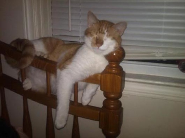 awkward-cat-sleeping-positions21