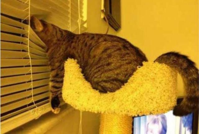 awkward-cat-sleeping-positions22
