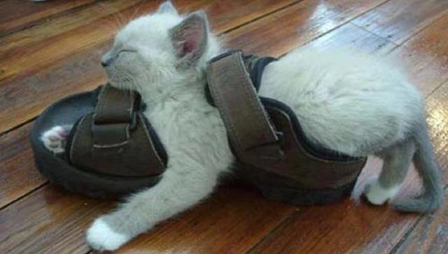 awkward-cat-sleeping-positions23